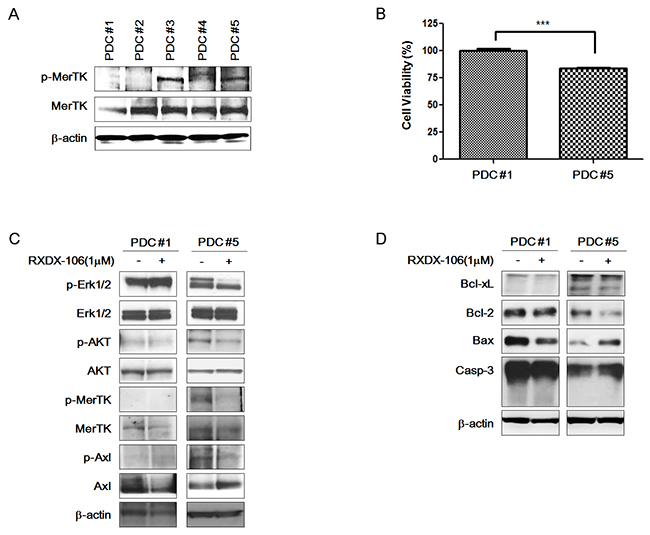 Anti-cancer effect of RXDX-106 in PDCs.