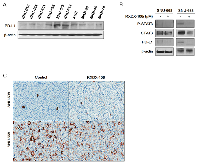 Reduction of PD-L1 expression under RXDX-106 exposure in sensitive cell line.