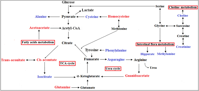 Metabolic pathways that include the most promising potential CRC metabolite biomarkers identified in this study.