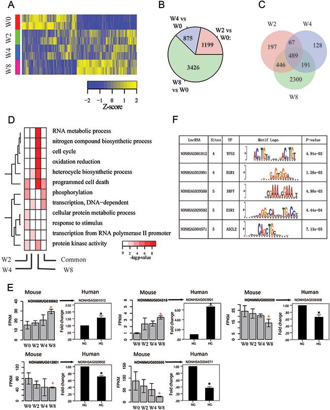 Transcriptome profiles of lncRNA genes associated with disease progression.