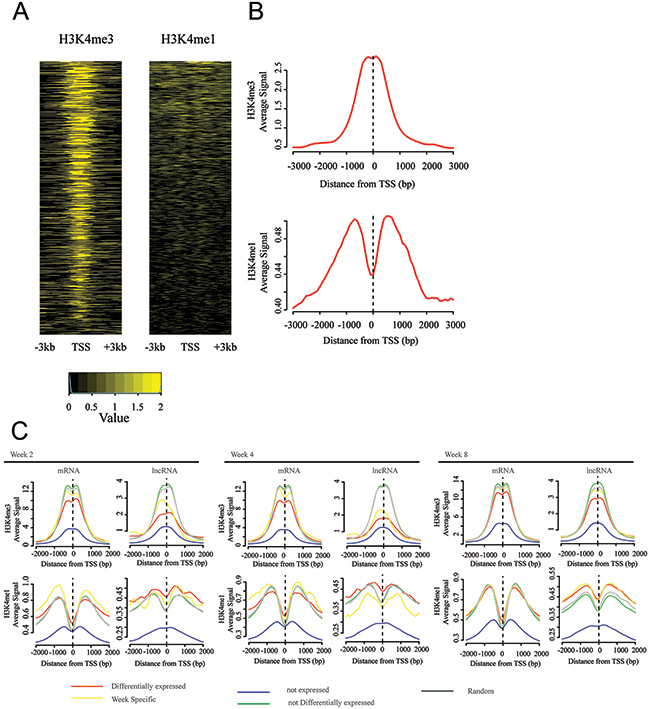 TSSs of differentially expressed lncRNA genes are enriched by active chromatin signal.