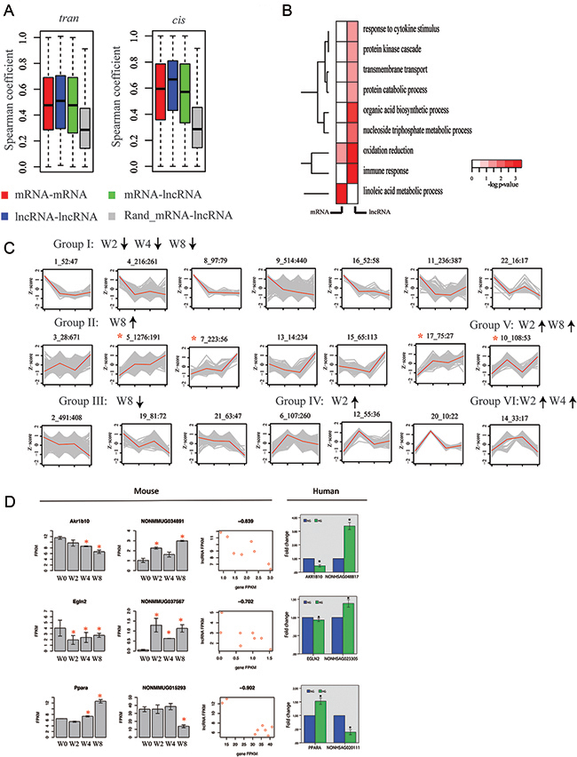 lncRNA genes are co-expressed with protein-coding genes during disease progression.