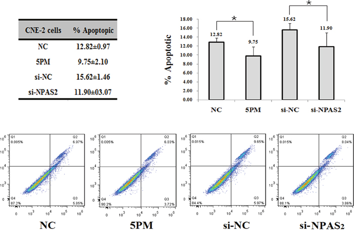 Effects of the forced reversal of both the miR-20a-5p and NPAS2 levels on the apoptosis of CNE-2 cells, with a graph of the analyzed data and plots of the original FACS data (A).
