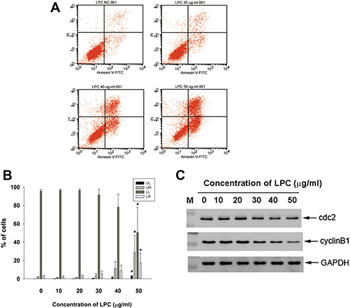 Effect of LPC on apoptosis of EAHY endothelial cells as analyzed by PI and annexin V dual fluorescent flow cytometry.