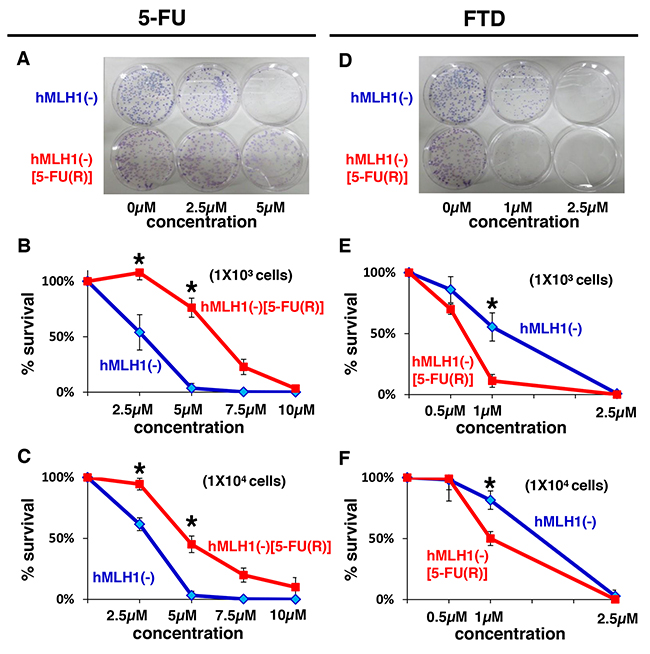 MMR-deficient cells that are refractory to 5-FU are sensitive to FTD.