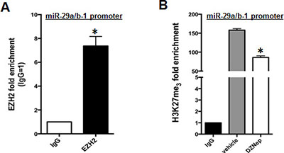EZH2 binds miR-29a/b-1 promoter and regulates its H3K27me3.