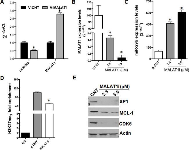 MALAT1 knock-down upregulates miR-29b expression.
