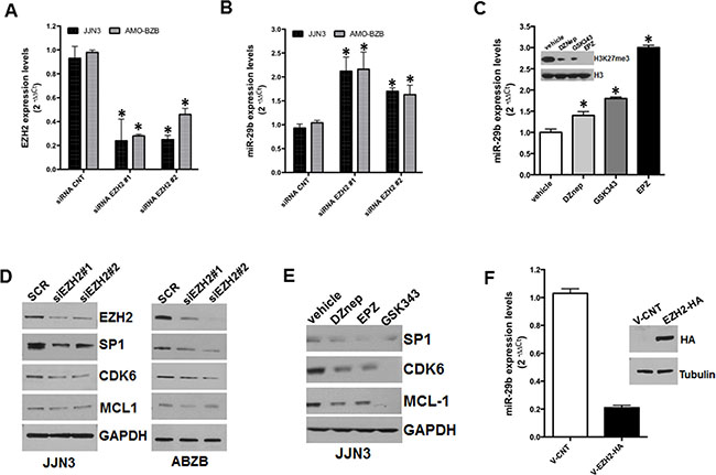 Inhibitory effect of EZH2 on miR-29b expression.