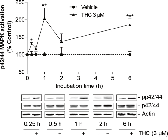 Time-course of p42/44 MAPK activation by THC in MSCs.