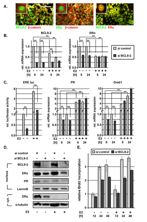 BCL9-2 regulates ER expression and modulates ER signaling in human breast cancer cells.