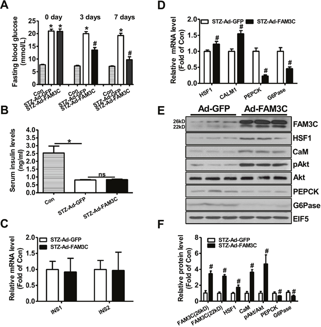 Adenoviral overexpression of FAM3C in type 1 diabetic mouse livers attenuated hyperglycemia.