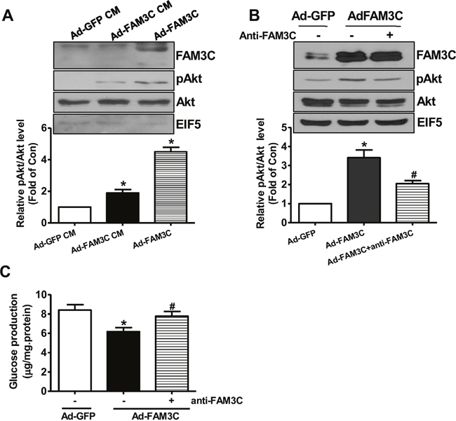 Secretion is important for FAM3C-induced Akt activation and gluconeogenesis repression in HepG2 cells.