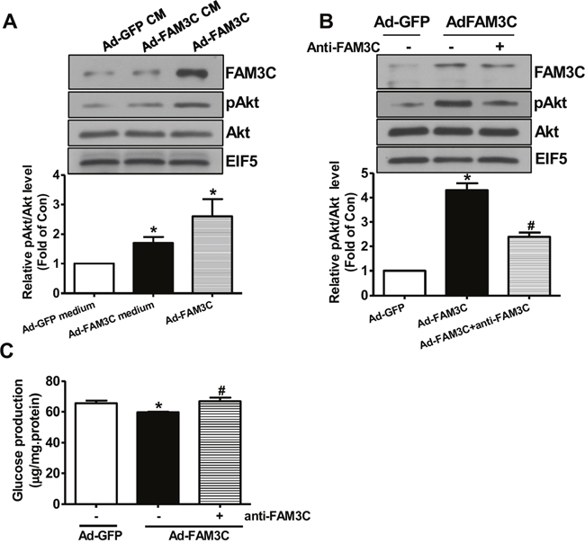 Secretion is imporant for FAM3C-induced Akt activation and gluconeogenesis repression in primary mouse hepatocytes.