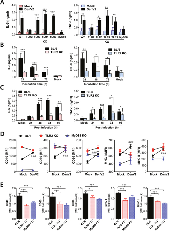 TLR2/MyD88 pathway is required for recognition of dengue virus infection.