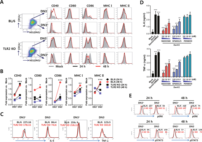 Bystander activation of uninfected DCs by DenV-infected DCs in a TLR2-dependent manner.