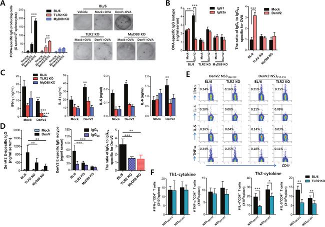 DenV induces Ag-specific Th2 immune responses in TLR2/MyD88-dependent manner.