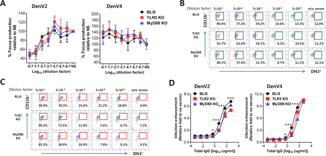 ADE of DenV infection is modulated by TLR2 and MyD88 molecules.
