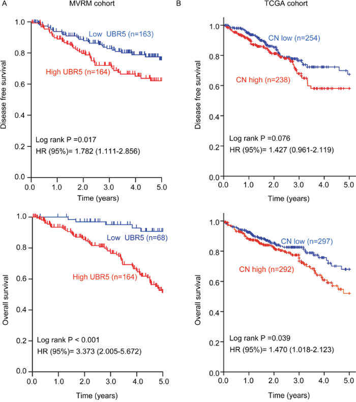 High UBR5 mRNA expression or a high UBR5 copy number in tumors predicts poor survival in patients with CRC.