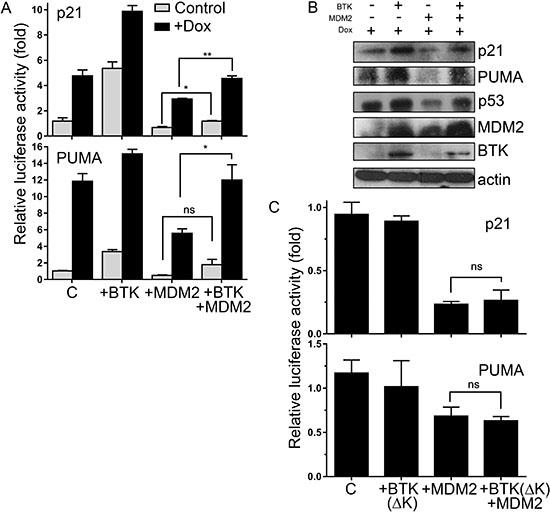 BTK prevents MDM2 inhibition of p53 transactivation functions.