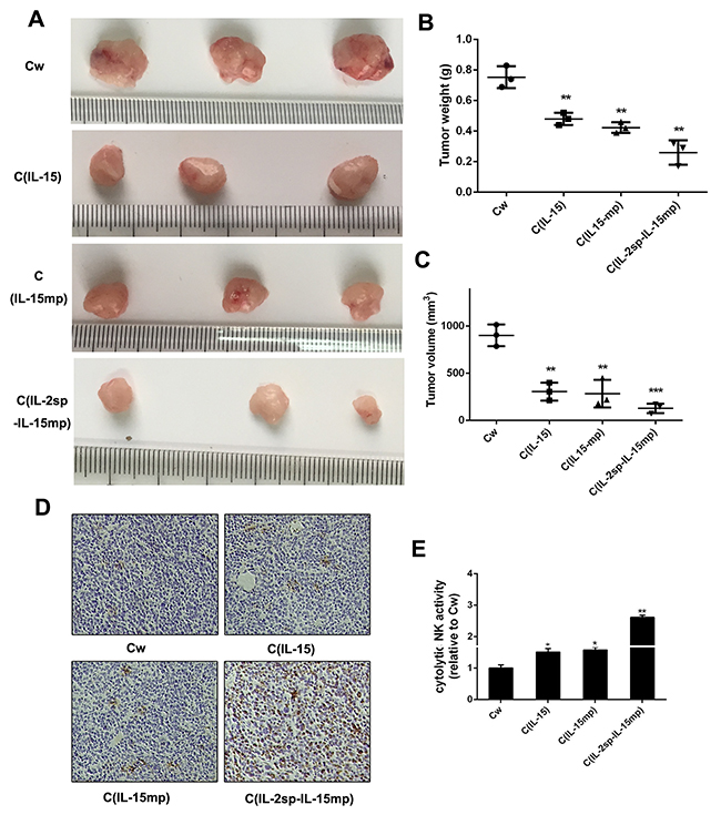 Anti-tumor potential of IL-15 in NCI-H446 cells.