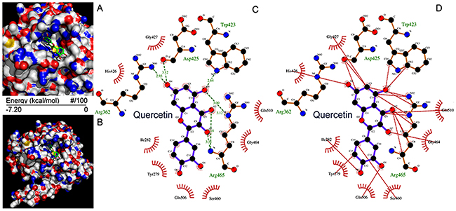 Molecular docking of quercetin on SHP2.