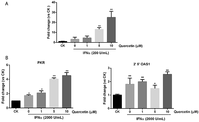 Quercetin promotes downstream genes expression in JAK/STAT pathway.