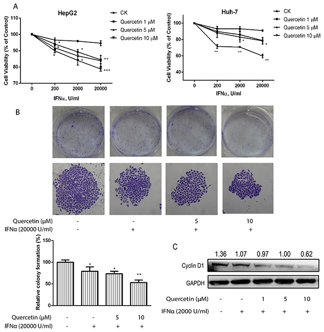 Quercetin enhances the inhibitory effect induced by IFN-α on cancer cell viability.