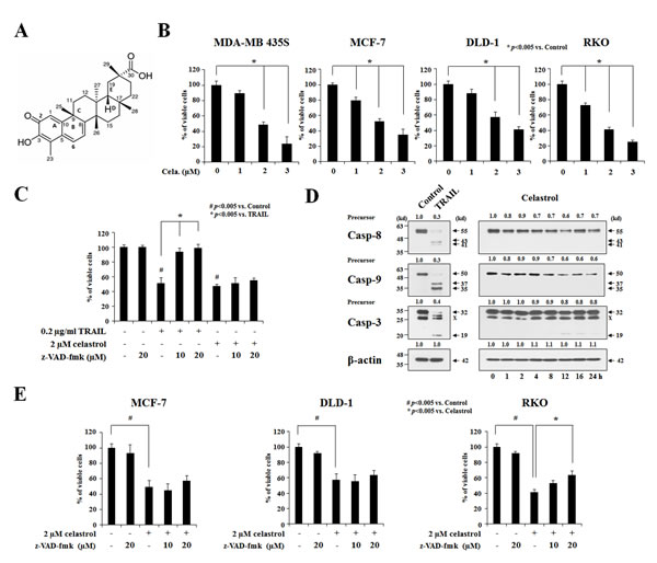 Apoptosis is not critically involved in the celastrol-induced cancer cell death.