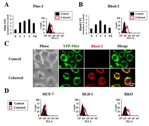 Celastrol induces mitochondrial Ca