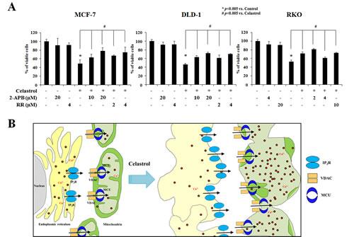 Celastrol induces paraptosis via IP3R-mediated Ca