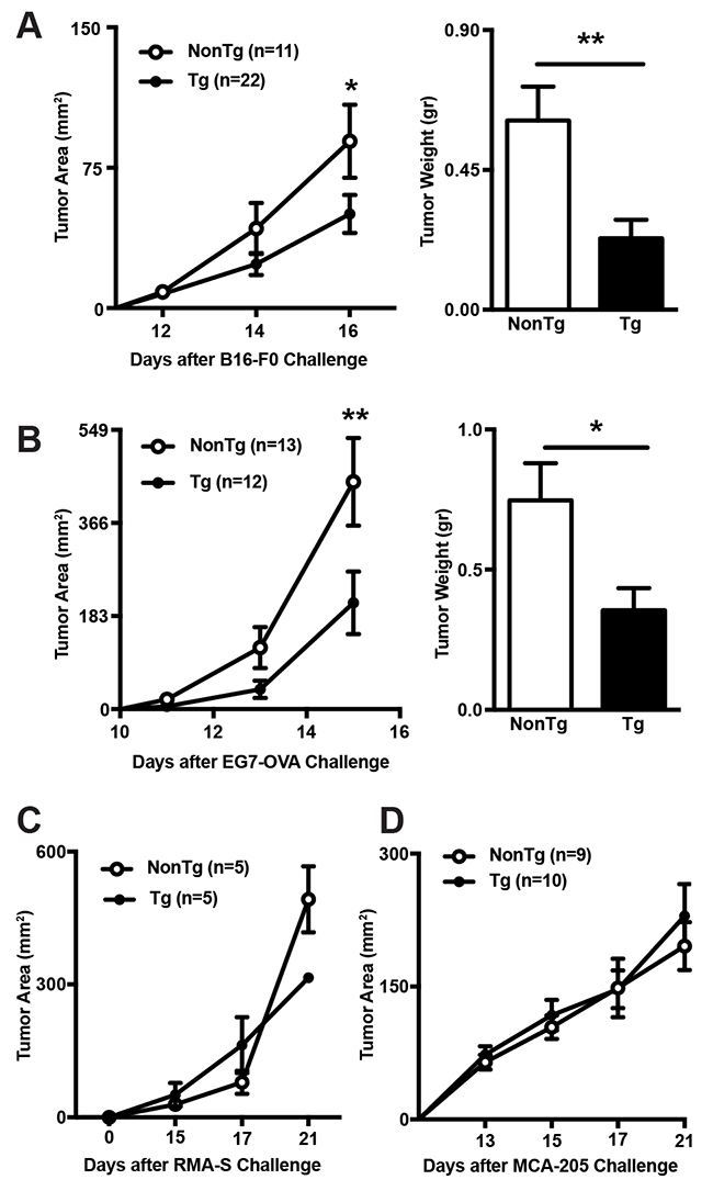 Comparison of tumor growth rates between shCD5EμTg and NonTg mice.