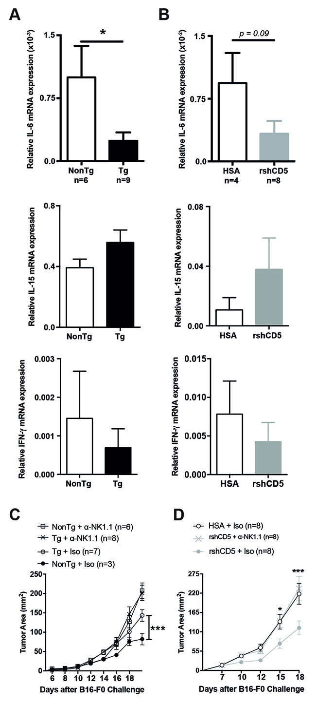 Abrogation of shCD5-mediated anti-tumor effects by NK cell depletion.