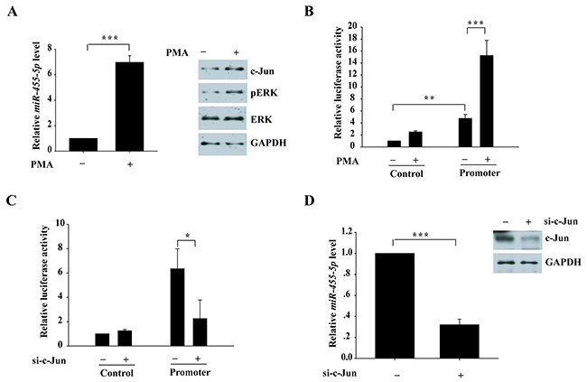 Activation of ERK signaling pathway induces miR-455-5p expression.