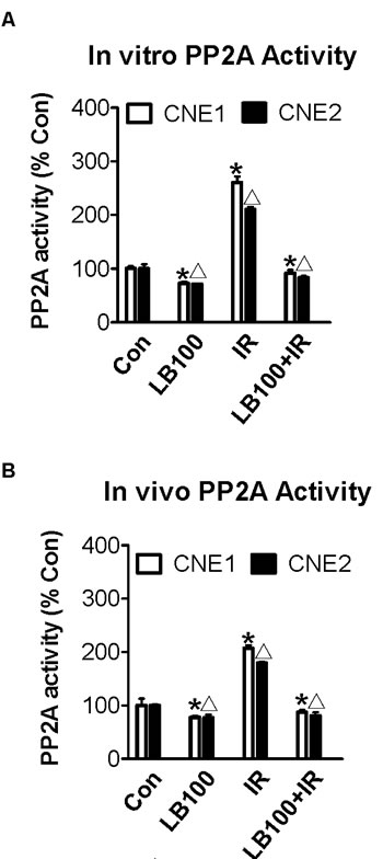 PP2A activity increases after radiation and is inhibited by LB100 in vivo and in vitro.