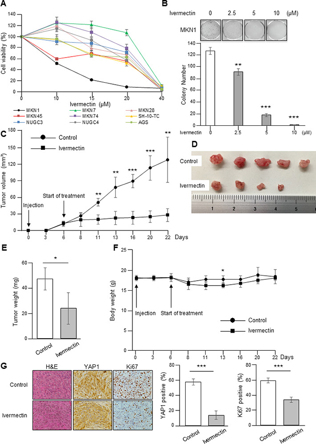 Ivermectin suppressed the growth of GC cells in vitro and in a xenograft mouse model.