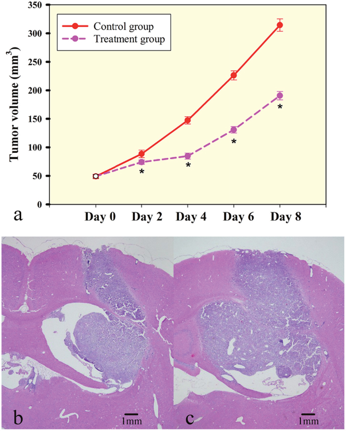 Rat C6 tumor growth is slowed by low dose of bevacizumab treatment.