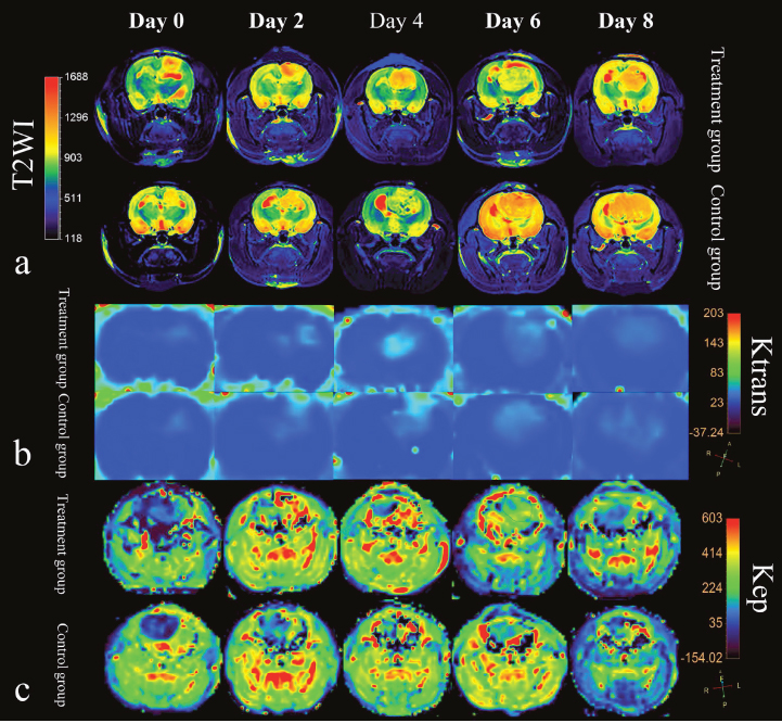 MRI features of rat C6 glioma model in treatment group and control group.