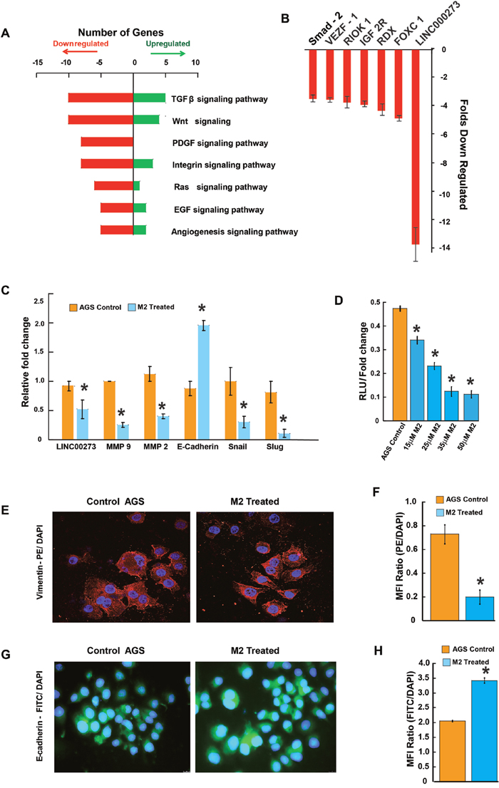 Tracing the molecules and pathways inhibited by M2 in preventing cancer cell migration and invasion.