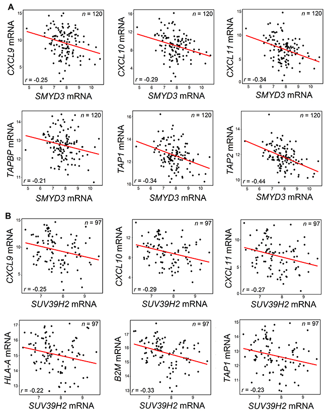 Negative correlations between SMYD3 (A) or SUV39H2 (B) and chemokines or APM molecules.