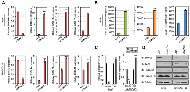 SMYD3 knockdown induces the expression of CD8+ T-cell attracting chemokines and antigen processing machinery molecules in SCCHN cells.