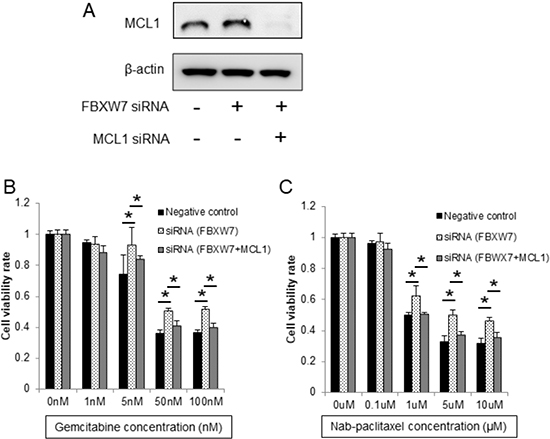 Enhanced chemoresistance in FBXW7-knockdown cells was eliminated by MCL1 suppression.