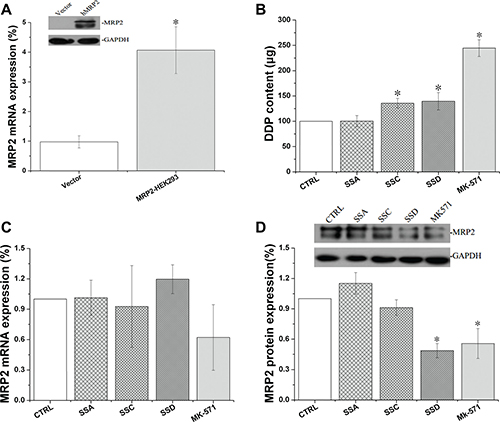 Effects of Saikosaponin A, C, and D on MRP2 activity and expression in MRP2-HEK 293 cells.
