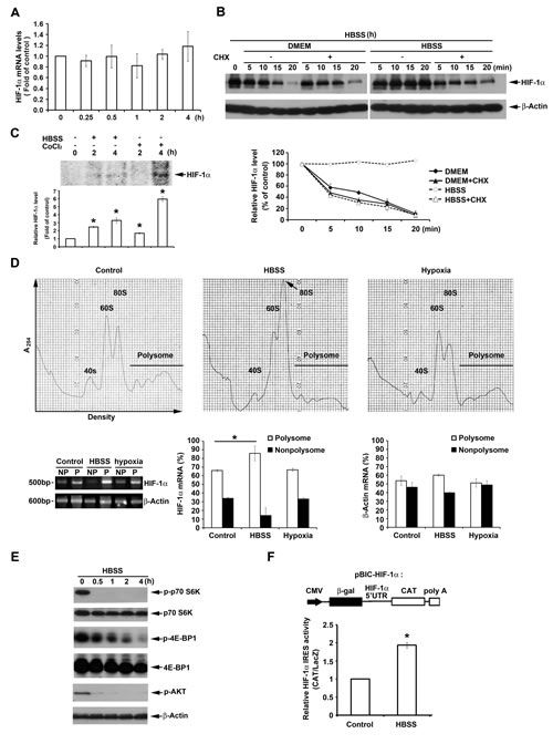 HBSS enhances HIF-1α expression through IRES-dependent translation.