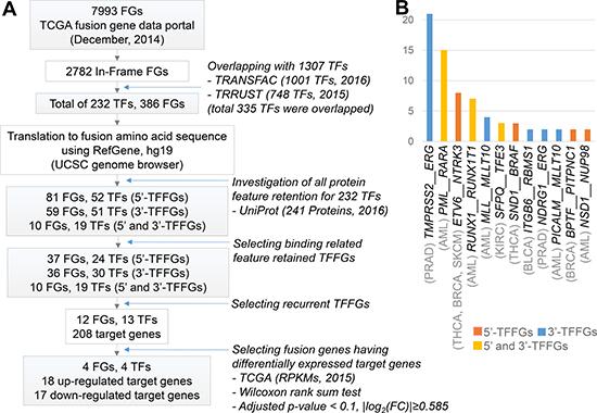 Pan-cancer analysis of TFFGs.