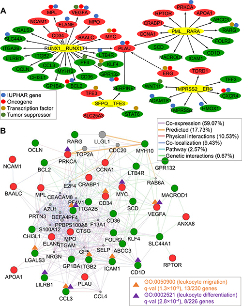 DETG network of four recurrent TFFGs and AML-specific network.