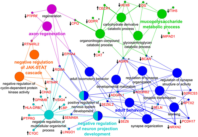 Network enrichment analysis of differentially abundant proteins.