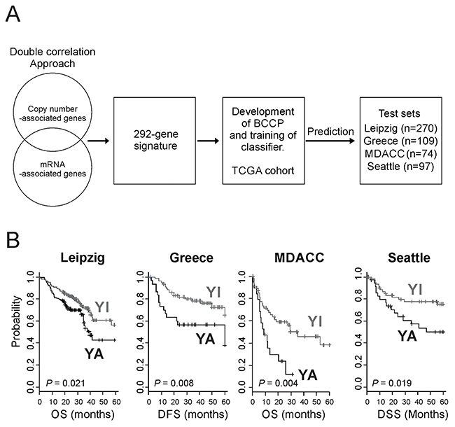 Construction of a prediction model using YAP1 gene signature and clinical significance of YAP1 activation in HNSCC.