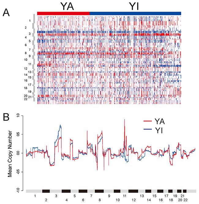 DNA copy number alterations in TCGA HNSCC cohort.