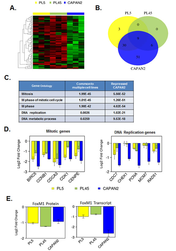 Gene expression profiling of RB/E2F target genes reveals differential transcriptional repression.