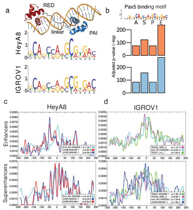 Defining the PAX8 binding motif and identifying candidate co-regulators.
